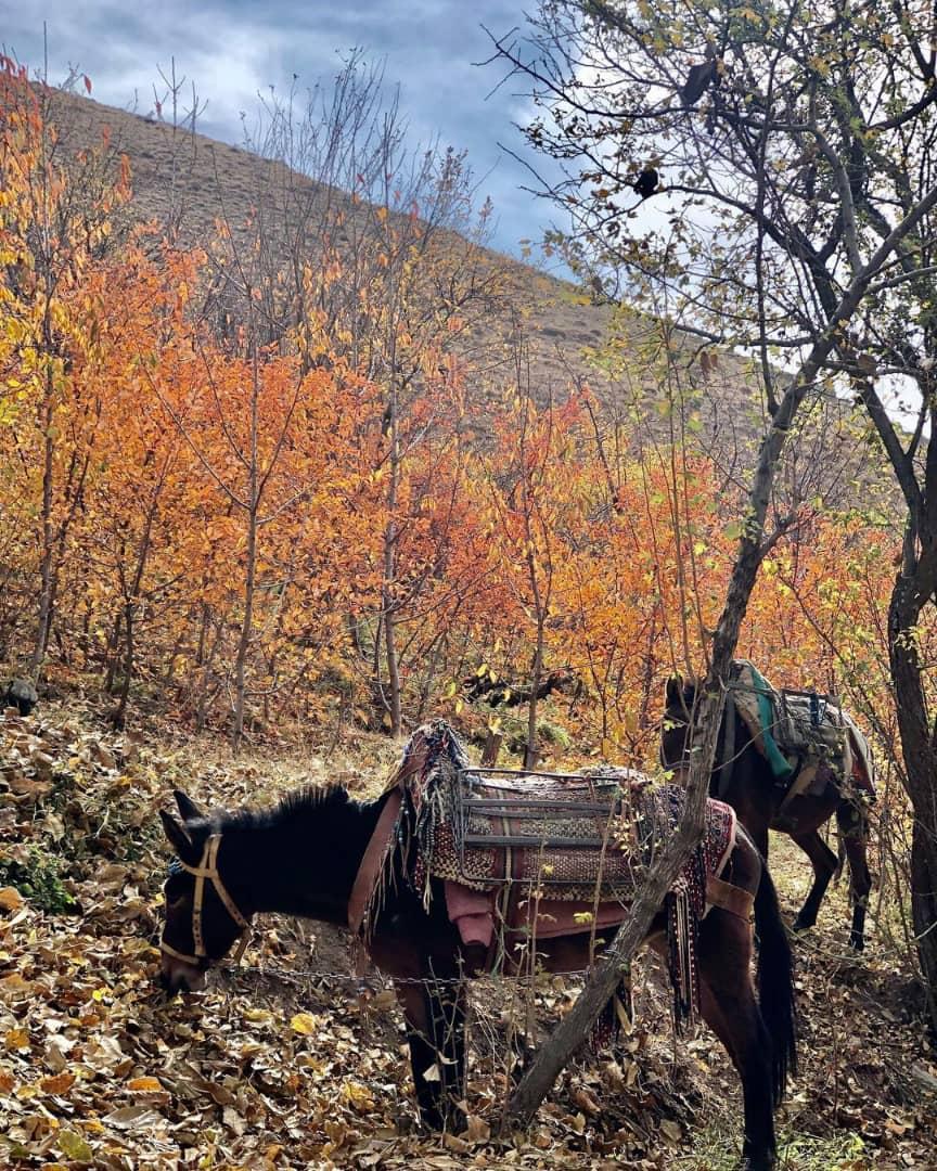 پاییز روستای آهار